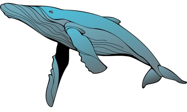 Što se krije iza zastrašujuće priče o Plavom kitu?